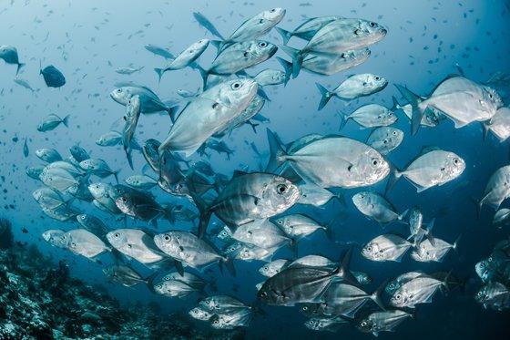 Откуда «приплывает» рыба к российским потребителям